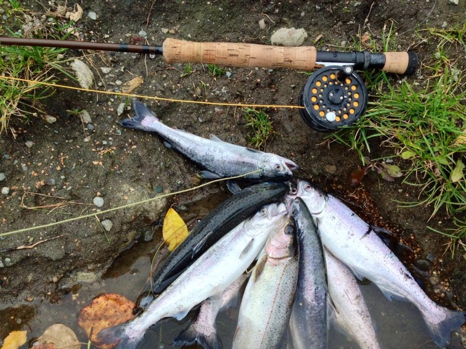 Fly fishing for landlocked salmon in anchorage alaska for Salmon fishing anchorage