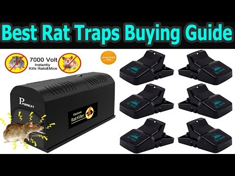 Top 5 Best Rat Traps In 2018|Best Mouse Traps|Which Is The Best Rat Traps In The Market|Mouse Trap