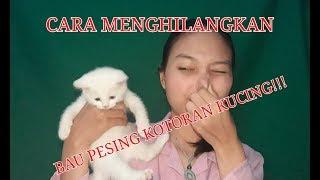 Download Video TIPS/CARA MENGHILANGKAN BAU PESING KUCING   KucingYoshi #4 MP3 3GP MP4