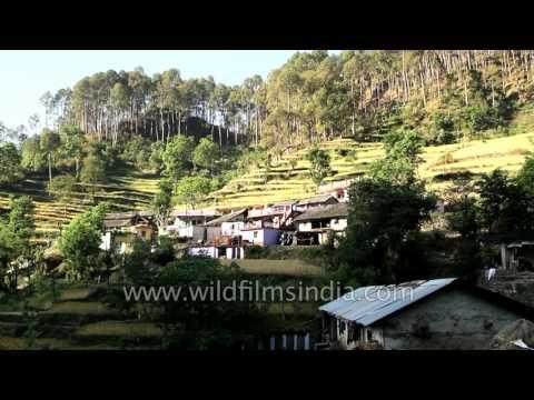 Terrace farming in Silgaun village of Uttarakhand