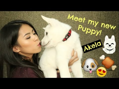 Our New White German Shepherd PUPPY! Akela | Leeannjarrell