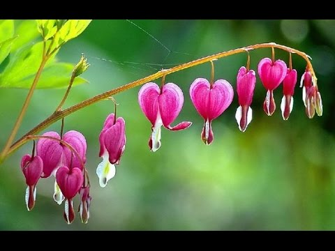 top  beautiful flowers in the world  top amazing  most, Beautiful flower