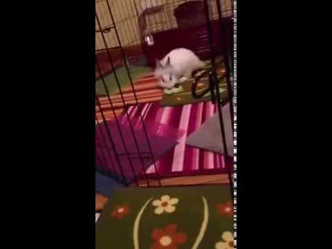 Come sistemare la casa a prova di coniglio youtube for Come sistemare la casa