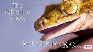 Crested Gecko and Scarlet King Snake: The reDefine Show: Animal Edition! With Tamara Lackey