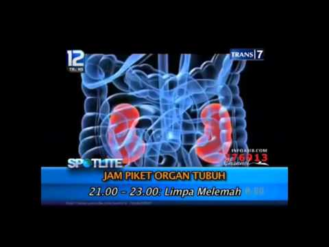 Jam Kerja Organ Tubuh Manusia 24 jam Yang Wajib Diketahui