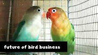 The future of bird breeding after lockdown