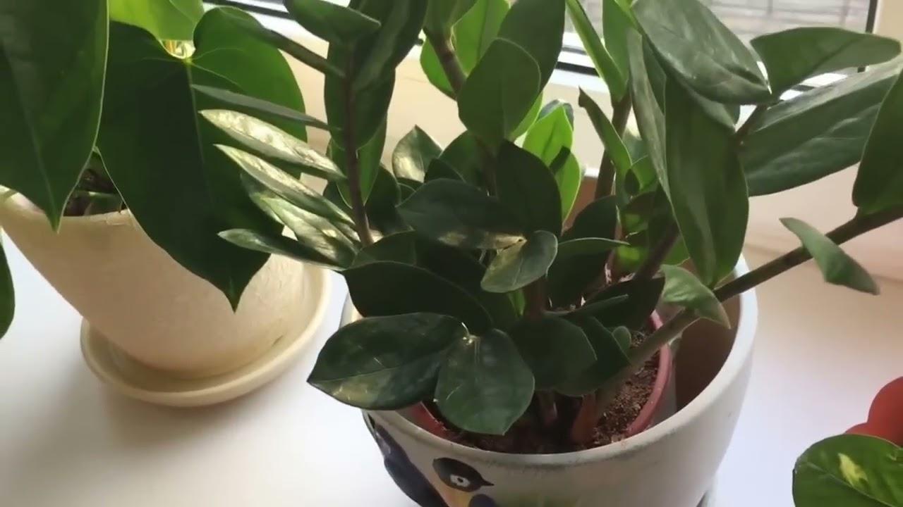 Азбука цветов. Цветочная азбука