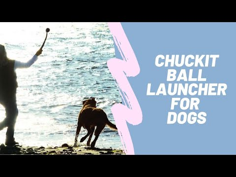 canine-hardware-chuckit-ball-launcher-for-dogs