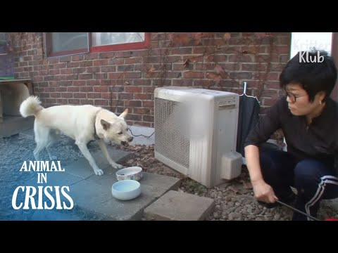 the-sad-story-of-dog-who-had-to-turn-fierce-before-owner-he-loves-|-animal-in-crisis-ep142