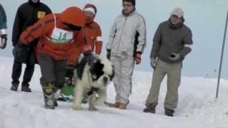 2010年2月27、28日。稚内で行われた犬ぞり大会の模様です。稚内は南極物...