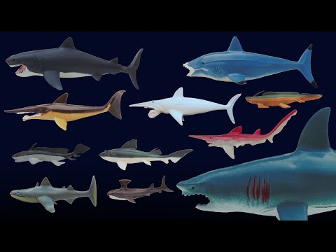 Prehistoric Sharks - Featuring Megalodon - The Kids