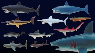 Prehistoric Sharks - Featuring Megalodon - The Kids' Picture Show (Fun & Educational Learning Video) thumbnail