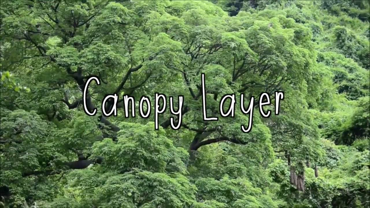 What Are The Layers Of The Rainforest Youtube