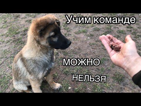 Как обучить щенка команде нельзя