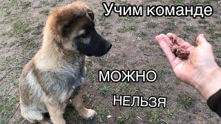Как научить собаку команде можно нельзя