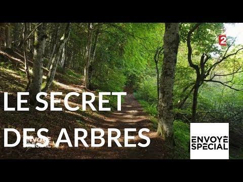 Envoyé spécial. Le secret des arbres - 26 octobre 2017 (France 2)