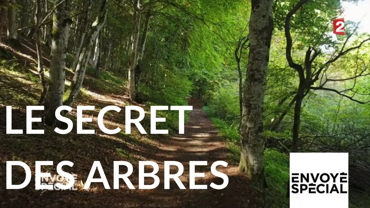 Le secret des arbres Maxresdefault