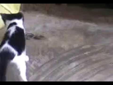 cuộc chiến Mèo - Rắn
