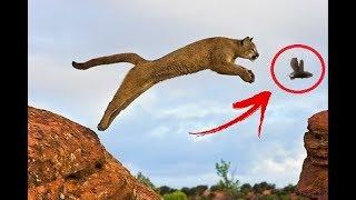 Wild Animals Hunting Skills - Wild Animals Best Hunting Video - wild animals amazing jumping powers