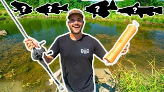 Catching and Cooking EVERY SPECIES in My BACKYARD POND!!! (Multi-Species Mukbang)