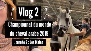 Vlog - Championnat du monde du cheval arabe (épisode 2)