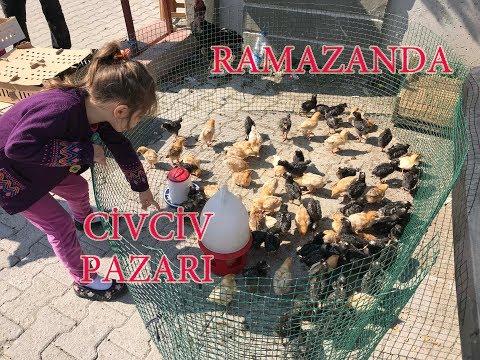 RAMAZANDA TAVUK CİVCİV PAZARI