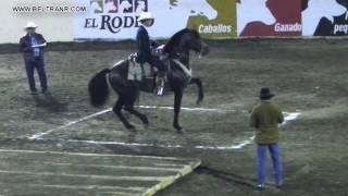 Caballos Bailadores Categoría A - 4 - Feria G Culiacan