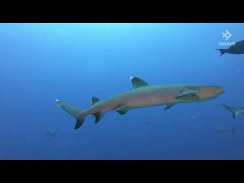 4K Sharks In Coral Sea Wallpaper 50 Mins