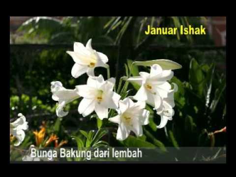 Bunga Bakung dari lembah - Januar Ishak