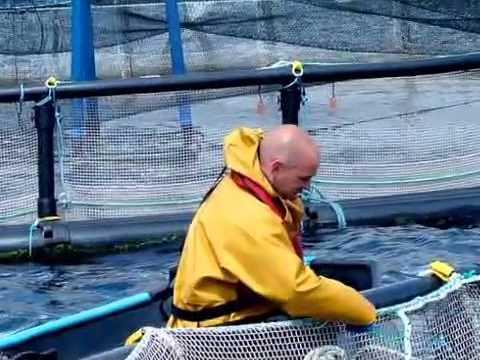 Organic Atlantic Salmon Farming - Glenarm Organic Salmon