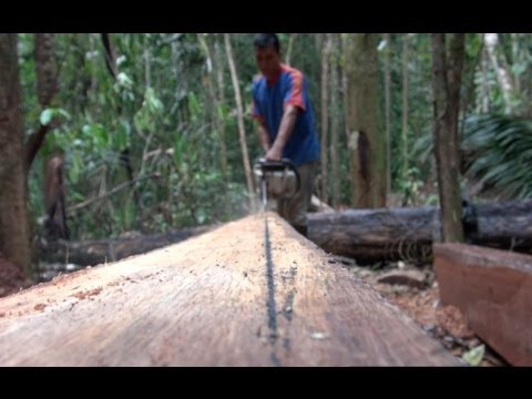 Timber and Livelihoods in Ecuador