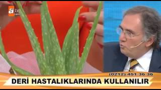 İbrahim Saraçoğlu Aloe Vera   Sarısabır bitkisi
