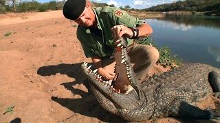 """Crocodile Hunt Razor Dobbs Alive """"CROCODILE ROCK."""" Part 2"""