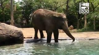 Elephant Expert Helping with Future Elephant Habitat - Cincinnati Zoo