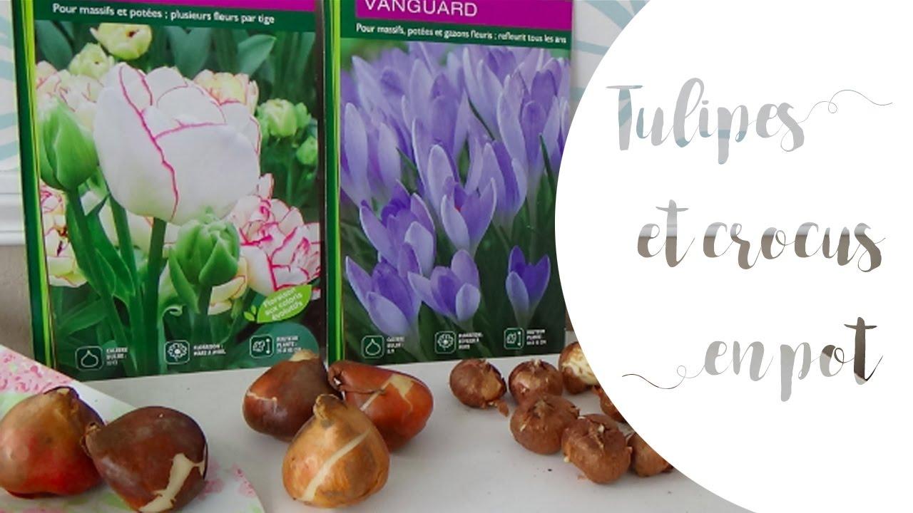 bulbes de printemps planter des tulipes et des crocus en. Black Bedroom Furniture Sets. Home Design Ideas