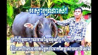 ក្របីញីមួយក្បាលមានស្នែងខុសប្លែកពីក្របីដ៏ទៃគេហ៊ានឲ្យតម្លៃកប់ពពកតែម្ចាស់បានបដិសេធ|Khmer News Sharing