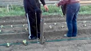 видео Сажалка (сеялка) для чеснока к мотоблоку