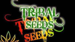 Tribal seeds -Run the show ! lyrics!