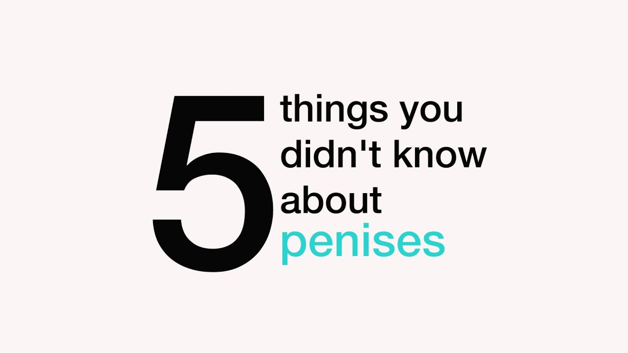 things to know about penis