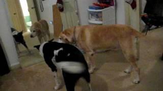 dog vs mirror