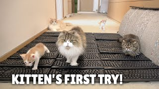 Kitten's First Try! Keyboard Carpet Challenge! | Kittisaurus