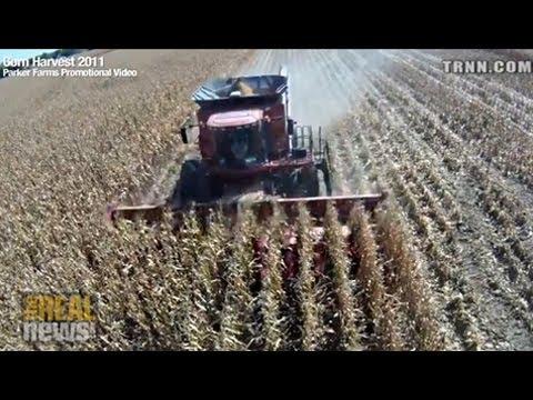 Subsidized Corn Destroying Global Bio-Diversity