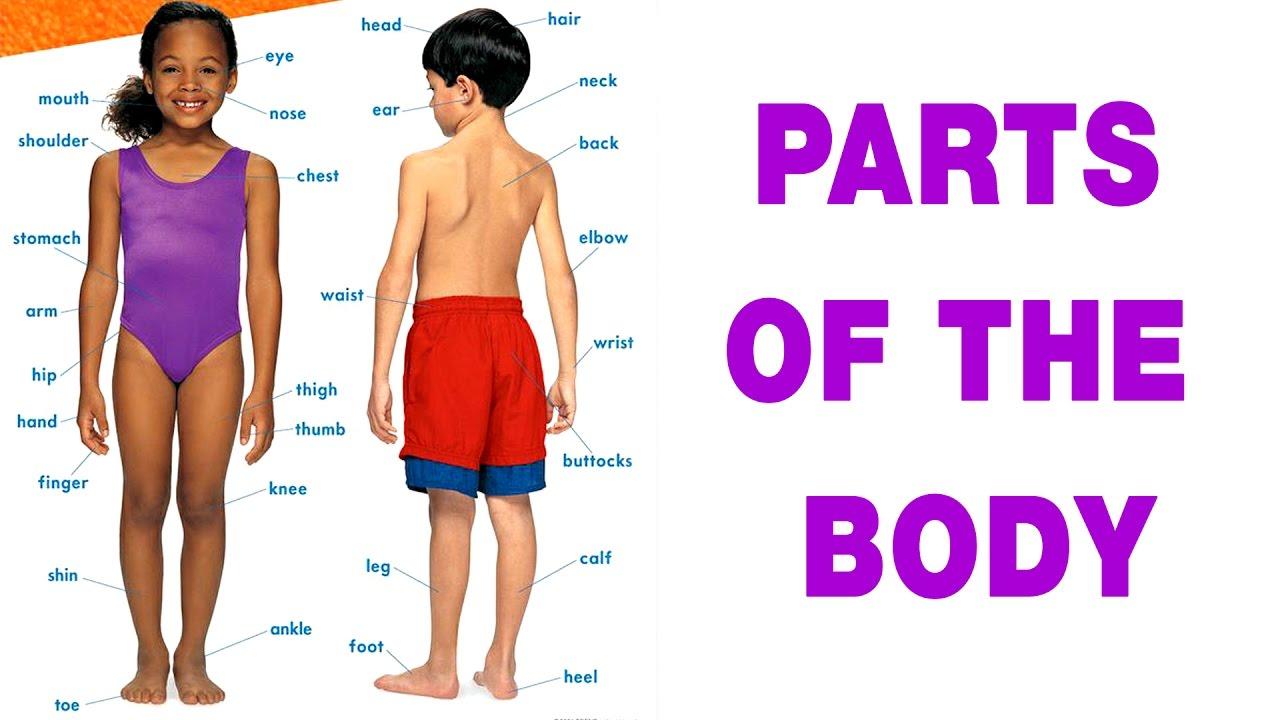 Speak Tamil Through English | Spoken Tamil | Lesson - 19 Body Parts