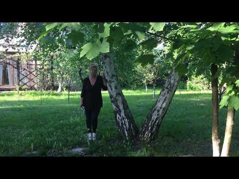 Берёзы в саду