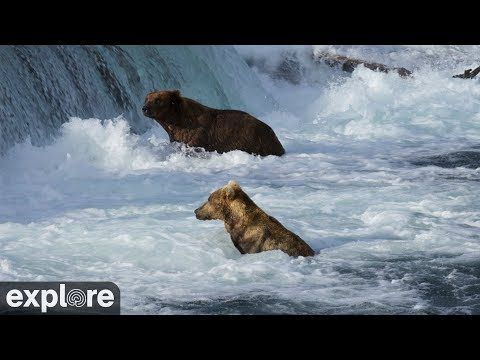 Brooks Falls Brown Bears Low powered by  EXPLORE.org