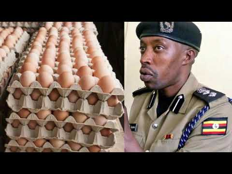 Uganda news | How fake eggs were discovered in Kampala