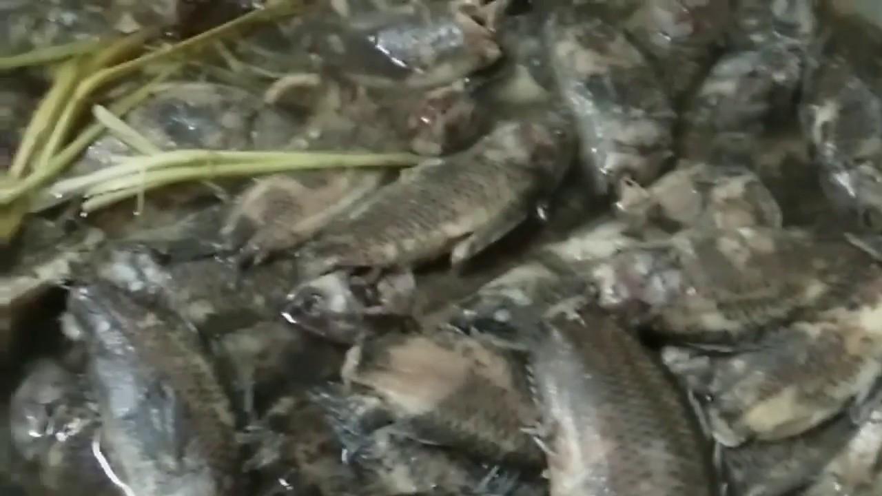 Cách làm Canh cá rô đồng/phần 1