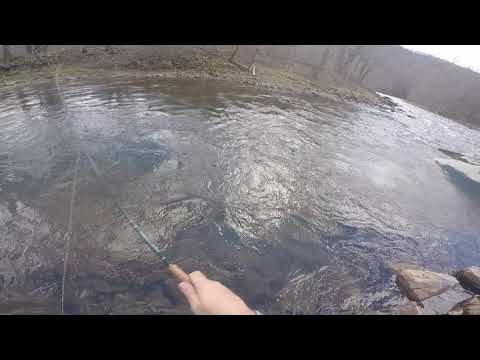 dry fork wv brown trout  3/16