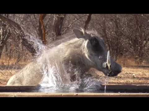 Namibia 2016 Archery Cull Hunt, Part 1