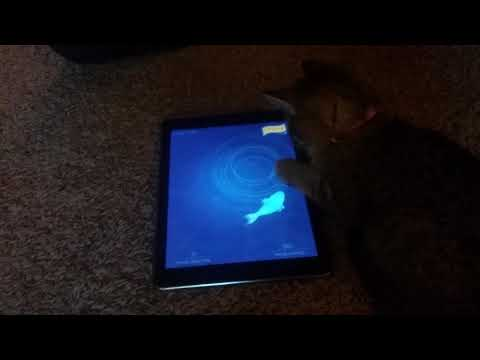 Kitty playing a kitty and cat game, she is fishing